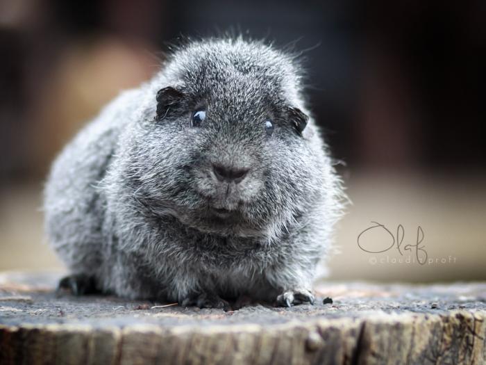 Olaf, 3 Jahre alt