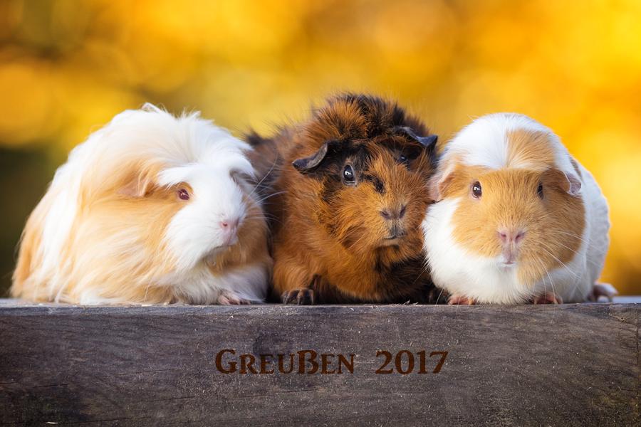 Gewinner Greußem 2017