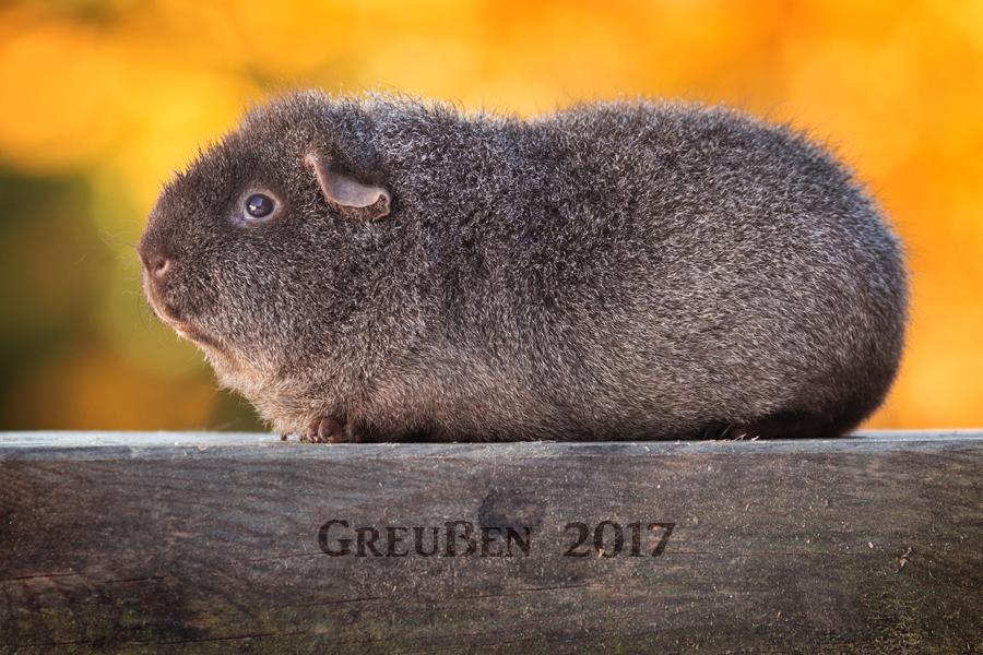 Rexgott in Greussen