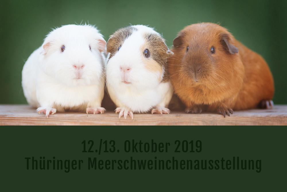 Thüringer Meerschweinchenausstellung 2019