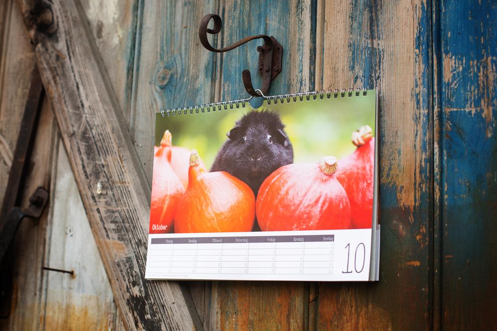 Kalender mit Meerschweinchen