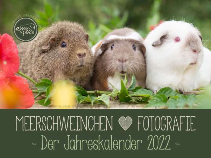 Meerschweinchenkalender 2022