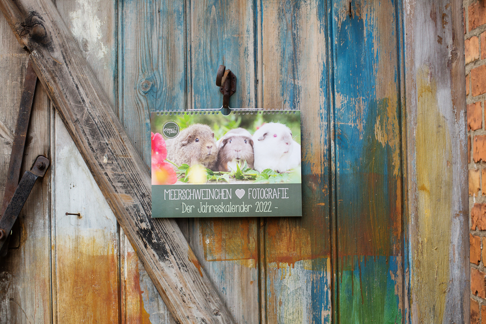 Kalender im A4 Querformat, 12 Motive, Meerschweinchen, Rassemeerschweinchen